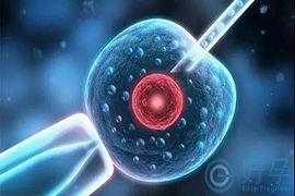 试管婴儿小知识:胚胎等级越高,试管婴儿成功率越高吗?