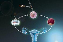 第三代试管婴儿是否会影响胎儿健康?