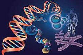 泰国三代试管移植胚胎成功率是多少?