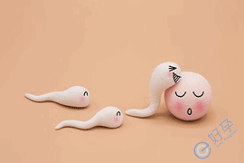 美国试管婴儿如何提高卵子受精率?