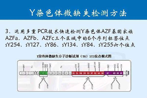 Y染色体微缺失检测方法