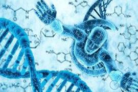 什么是Y染色体?Y染色体微缺失有那些影响