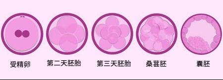 泰国试管培养第二天及第三天的胚胎有什么不一样