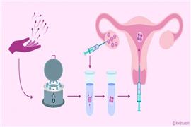 前后两次胚胎移植的间隔时间是多久?