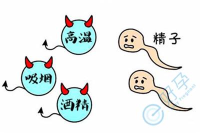 精子畸形意味着胚胎也畸形吗?如何科学调理提高精子质量?