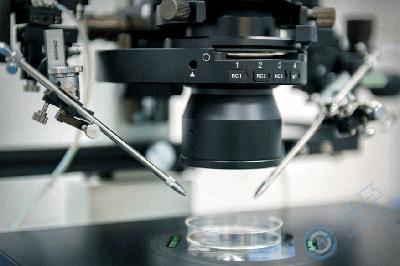 试管婴儿囊胚培育的过程和实验室要求
