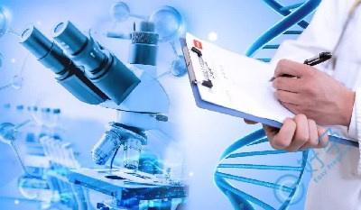 试管婴儿移植囊胚成功率高吗?培养囊胚需要什么条件?