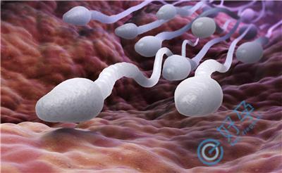 精子畸形率高过90%,还能做试管婴儿吗?
